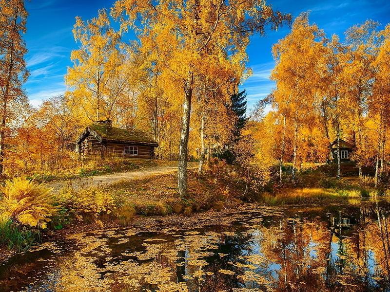Puzzle Sammeln Puzzle Online - Golden autumn 2