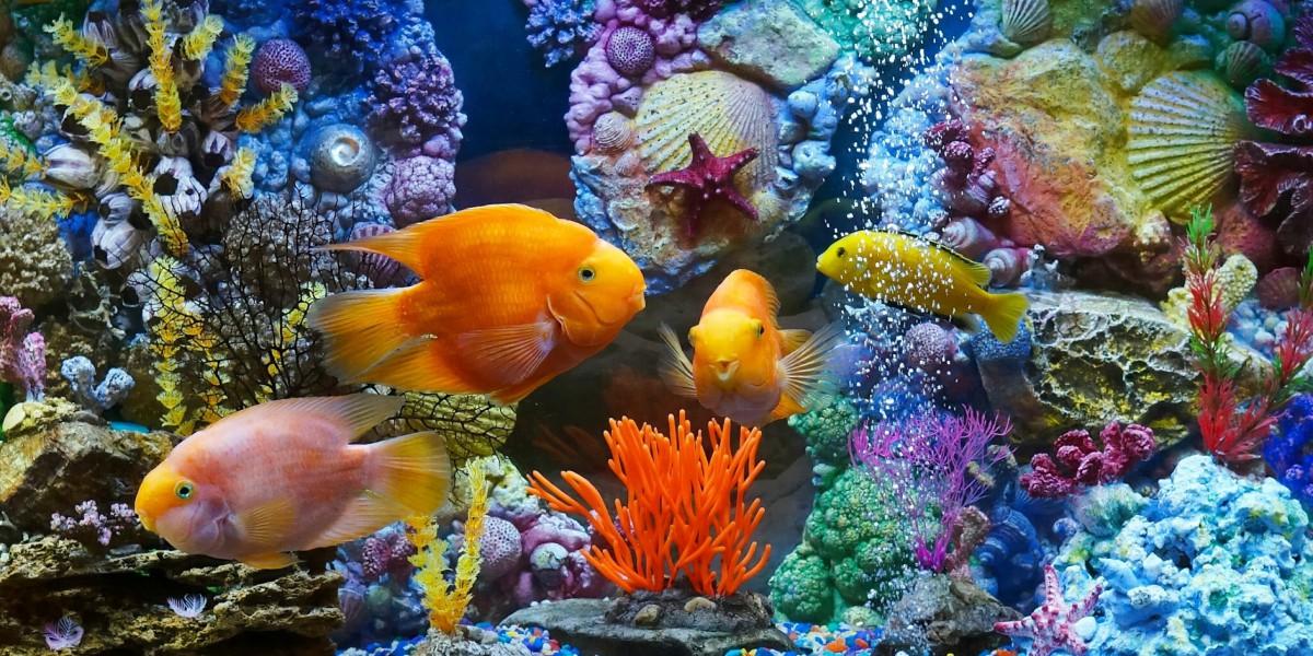 Puzzle Sammeln Puzzle Online - Aquarium